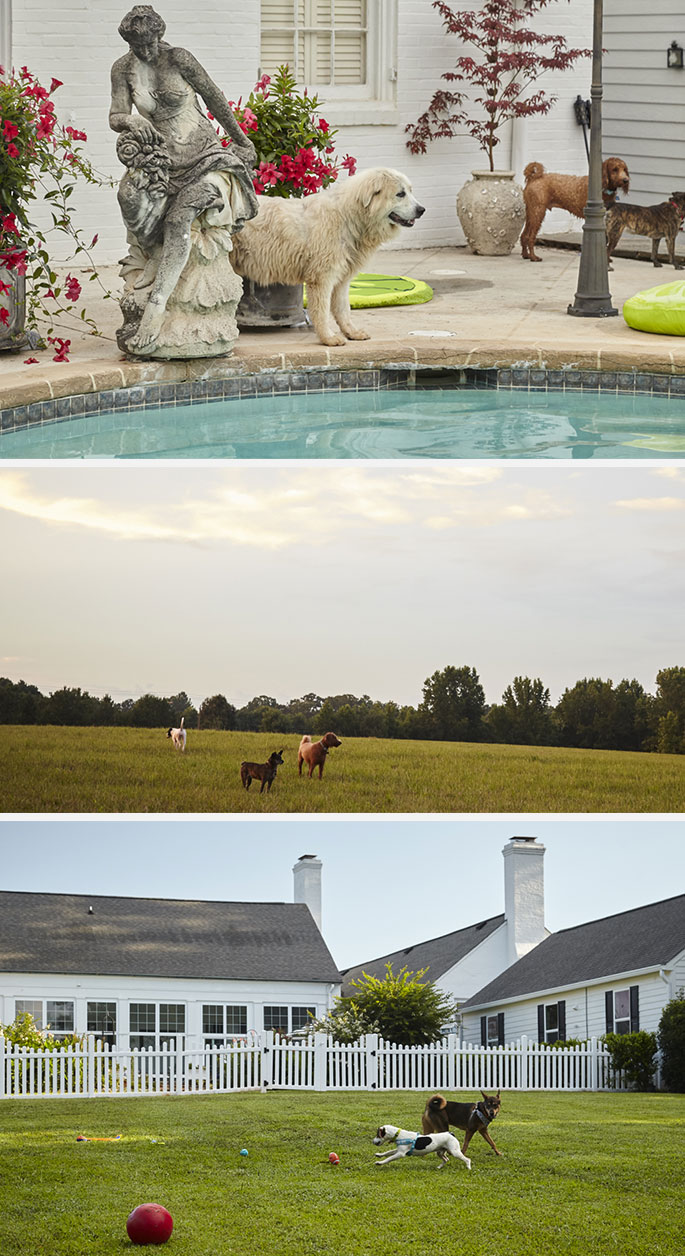 dog-collage-home