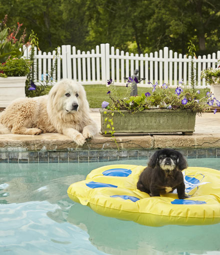 Dog Daycare Newton Georgia - dog laying down by pool and black dog on raft in pool relaxing